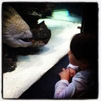 Visiting Mr Moray @ Two Oceans Aquarium