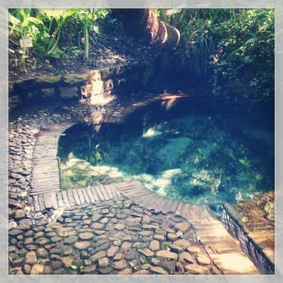The dell at Kirstenbosch